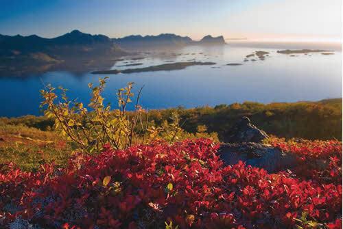 Arctic Summer by Reiner Schaufler, Nordnorsk Reiseliv