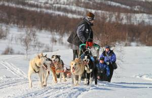 Northern Lights trips Norway. Dog sledding in Tromso. Photo by Lyngsfjord Adventures