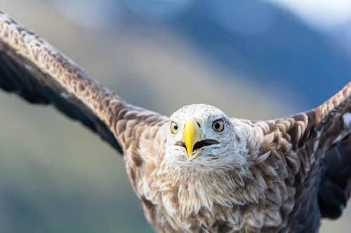 Sea Eagle Safari by Christine Lentz, Hurtigruten