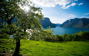 Summer on the shores of Sognefjord by Sverre Hornevik, Fjord Norway