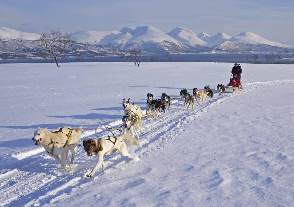 Tromso winter adventure - Dog sledding in Tromso Norway by Baard Loeken Nordnorsk Reiseliv