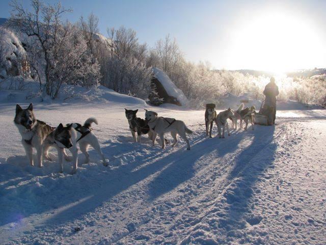 Dog sledding in Kirkenes, Norway. Photo by Helge Staerk, Kirkenes Snow Hotel