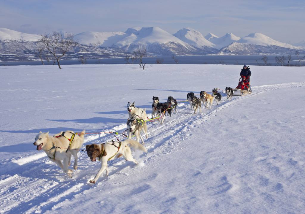 Dog sledding in Tromso Norway. Photo by Baard Loeken, Nordnorsk Reiseliv