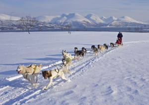 Dog sledding in Tromso Norway. Photo by Baard Loeken. Nordnorsk Reiseliv