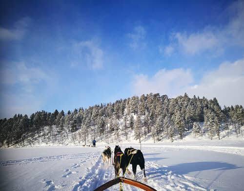 Dog sledding Tromso area by F. Schwarzlmueller, Fjord Travel Norway