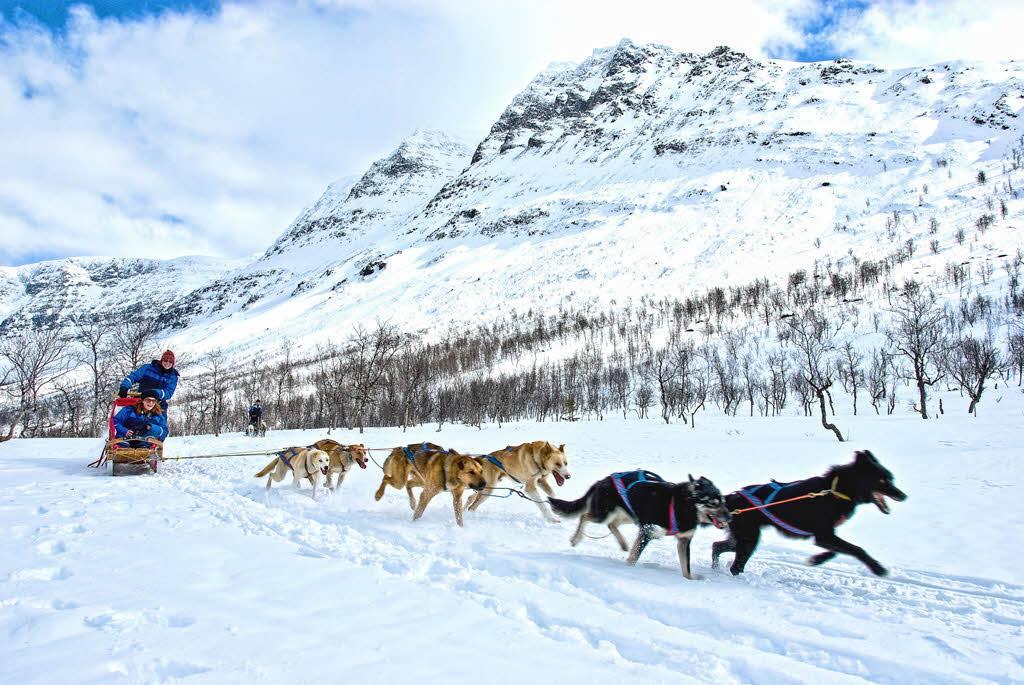 Dog sledding Norway by Lyngsfjord Adventure, Hurtigruten