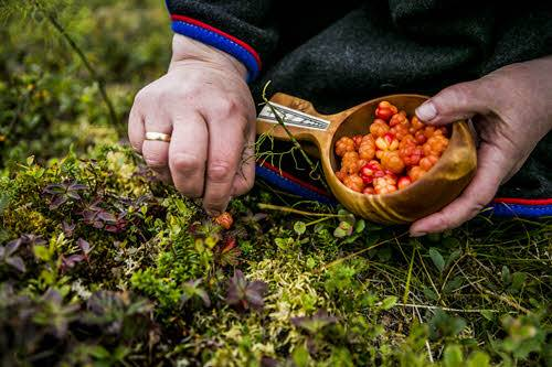 Picking cloudberries by Christian Roth Christensen, Visit Norway