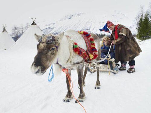 Reindeer Sledding Tromso By Baard Loeken, Nordnorsk Reiseliv