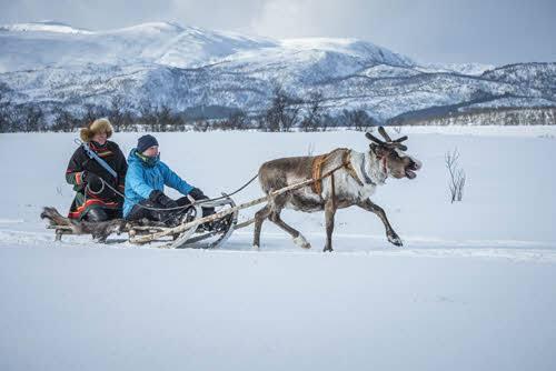 Reindeer sledding by Trym Ivar Bergsmo, Nordnorsk Reiseliv