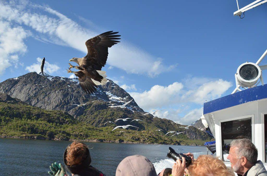 Sea Eagle Safari Lofoten by Ulrike Geuder, Hurtigruten