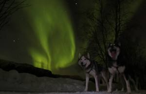Dog sledding & Northern Lights in Norway. Photo by Trond Anton Andersen www.finnmarkslopet.no