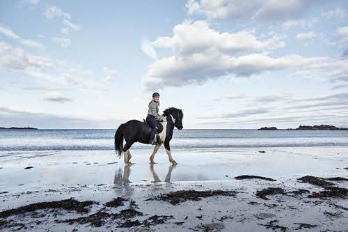 Horse on a beach on Lofoten Islands by Sigve Aspelund, Hurtigruten