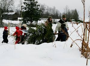 Christmas tree by Thomas Skyum, Visit Norway