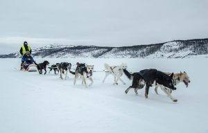 Arctic dog sledding. Photo by Kirkenes Snow hotel