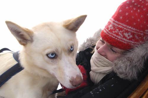 Dog sledding Alta by Trym Ivar Bergsmo, Nordnorsk Reiseliv