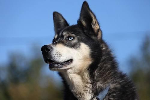 Husky Walk Tromso by Roger Johansen, Nordnorsk Reiseliv