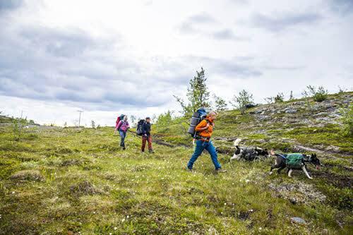 Husky Walk by Sara Johannessen, Visit Norway