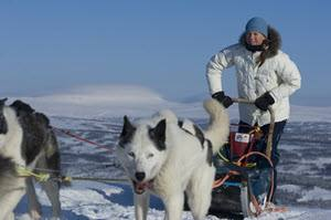 Dog sledding Roros by Terje Rakke, Nordic Life, Visit Norway