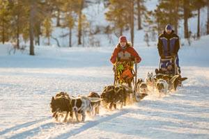 Dogsledding at Malangen Resort by Malangen Resort
