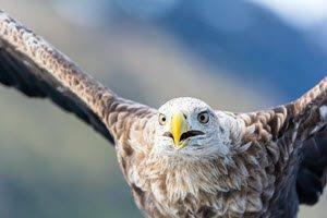 Sea Eagle Safari Lofoten Islands by Christine Lentz, Hurtigruten