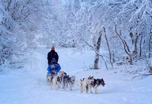 Husky sledge adventure by Judith Deacon, Hurtigruten