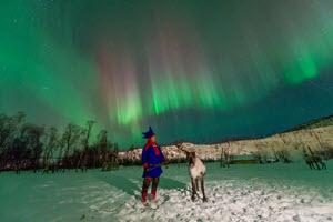 Reindeer under the Northern Lights by Orjan Bertelsen, Visit Northern Norway