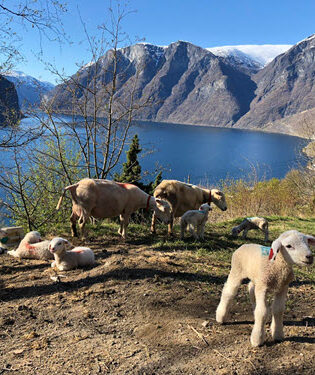 Spring on Sognefjord by Terese Kvinge