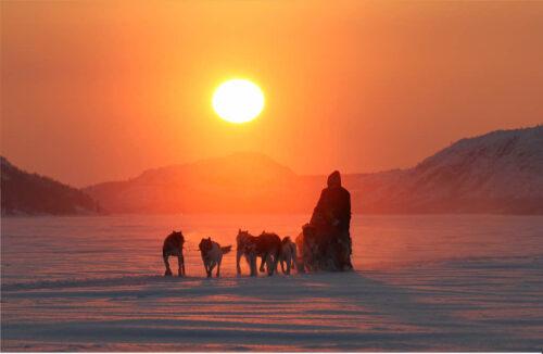 Dog Sledding By Kirkenes Snowhotel