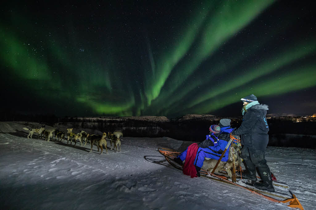 Dog Sledding Under The Northern Lights By Kirkenes Snowhotel