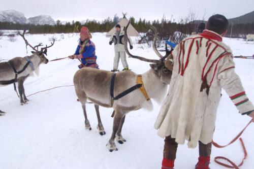 Sami with reindeer in Alta By Trym Ivar Bergsmo, Nordnorsk Reiseliv